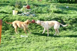 Mamma Mary och hennes syster Jazza vill ha samma plastkruka