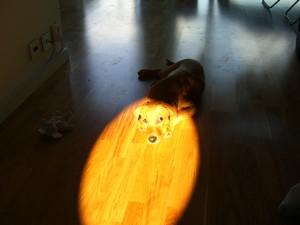 Tittin i solen!