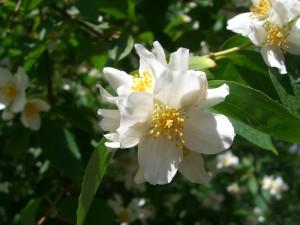 Fina blommor
