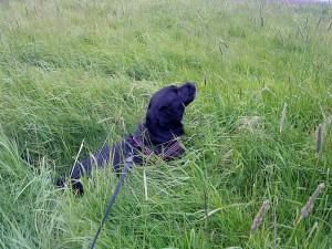 Ligga i gräset å ha det bra