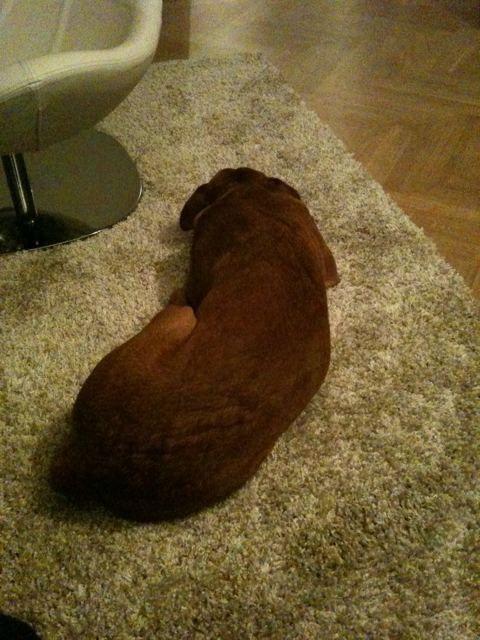 Hundmatta å golv
