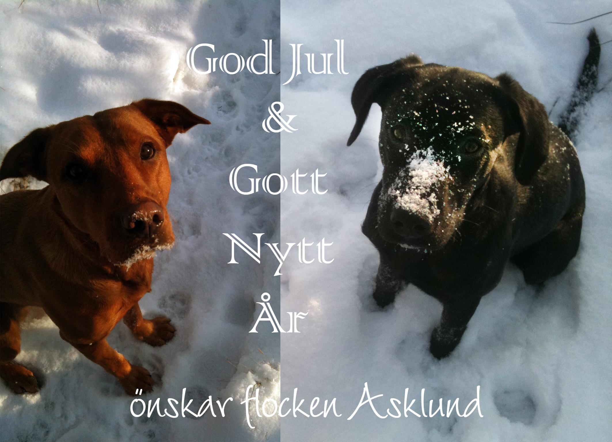 Julkort från flocken Asklund