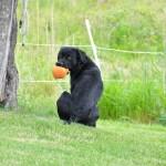 Släpper inte min boll i första taget.