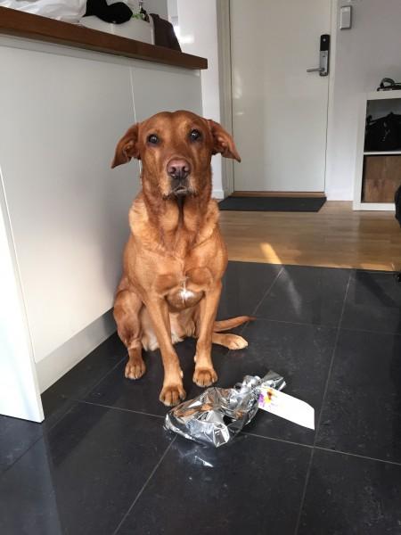 Fox med paket från MorrMorr