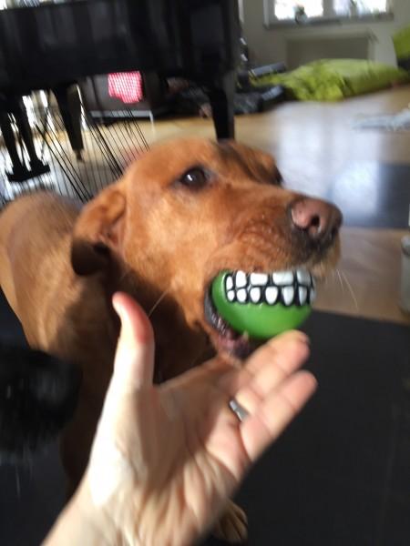 Tandboll från MorrMorr!