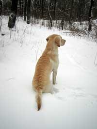 Hej då Snön! Kommer snart tillbaka!