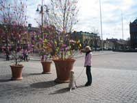 Påskträd