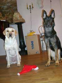 Hugo och Brumma