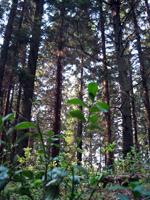Skönt i skogen