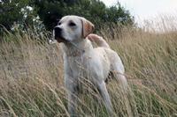 Hugo i gräset på Björkö