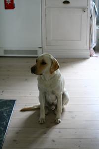 Hugo väntar på middag