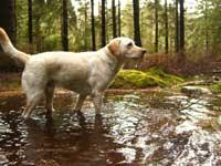 Hugo i skogen