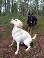 Hugo å Brumma i skogen