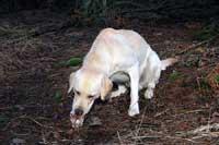 Hugo har också hittat sitt ben