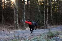 Catch fick ge sig iväg in i skogen först