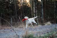 Jag hittade också en dummy i skogen!