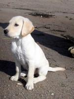 Hugo på stranden den 26 september 2004