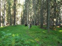 Det fanns skog nästan överallt i Värmland