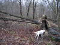 Hugo kontrollerar rötterna