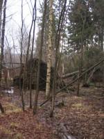 Stora rotvältor i skogen