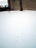 Hugo springer på snö