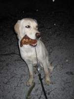 Hugo har örat i munnen
