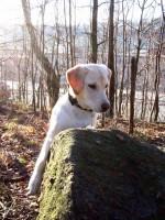 Hugo letar bakom stock och sten