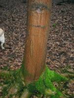 Coolt träd