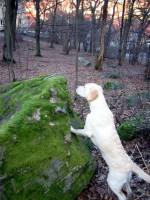 Hugo kontrollerar höjden