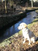 Hugo spanar utmed bäcken