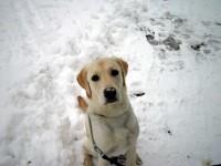 Snönosen Hugo