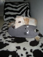 Hugo med kuddkatten