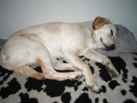 Hugo somnar igen