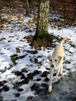 Spring i skogen