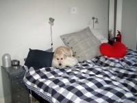 Hugo i säng
