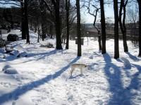 Hugo utmanar den trötta snögubben