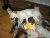 Trött Hugo med Lilla Hunden vid sin sida