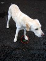 Hugo har hittat en vårblomma i plast