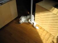 Kontorshunden Hugo