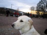Hunden som vi fick med oss
