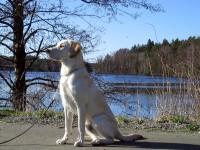 Hugo framför Delsjön