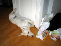 Hugo vilar i hallen
