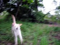 Hugo med fart