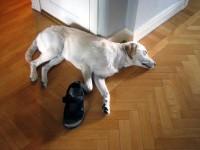 Hugo med sandal