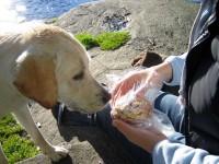 Hugo är intresserad av kanelbulle