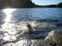 Åsså en simtur