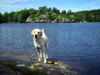 Hugo nära vattnet