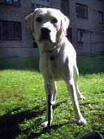 Hugo på innergården