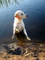 Hugo i vattnet