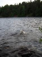 Hugo simmar lugnt